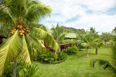 Le luxuriant jardin paysagé