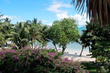 Profitez de votre séjour à l'hôtel L'Archipel au cœur de la végétation luxuriante tropicale