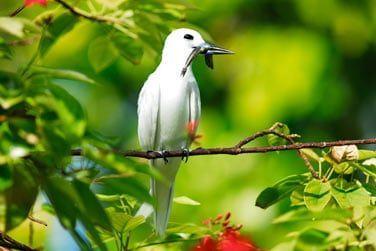 L'île est peuplée de nombreuses espèces d'oiseaux tropicaux