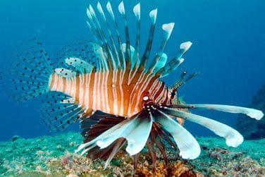 Les fonds marins préservés vous promettent de belles rencontres