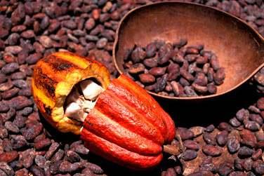 Au délicieux cacao...