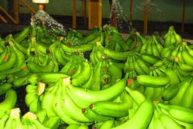 Et la Plantation Grand Café où vous découvrirez les vastes bananeraies