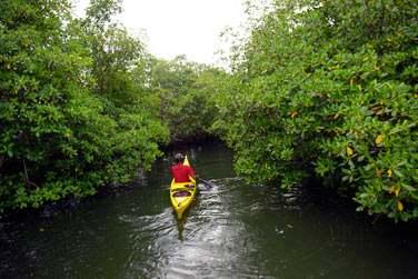 Grand Cul de Sac Marin : mangroves en canoë