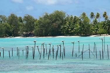 Dans nos îles de la Polynésie Française !!