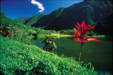 Le bleu, le vert... les fleurs... les paysages...