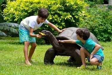 Rencontrez les célèbres Tortues géantes des Seychelles