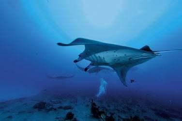 Le Constance Moofushi Resort est un paradis pour les plongeurs