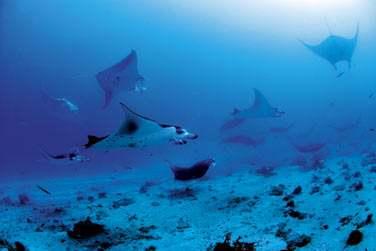 Les spots de plongée sont nombreux et réputés !