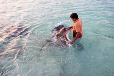 Nagez avec les raies dans le lagon... Une expérience incroyable !