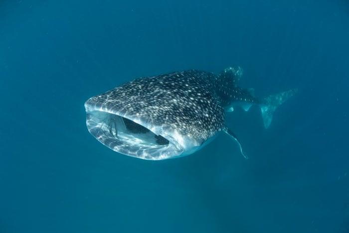 Séjour plongée aux Maldives hôtel LUX* South Ari Atoll