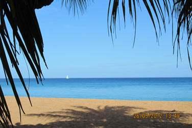 Tout près de la plage de Grande Anse, l'une des plus belles plages de l'île !
