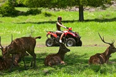 Vous pourrez y découvrir une faune sauvage en liberté