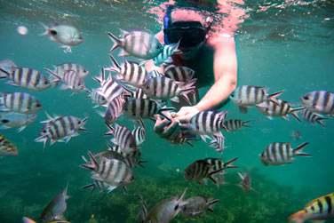 Et plongez au coeur d'une faune sous-marine foisonnante