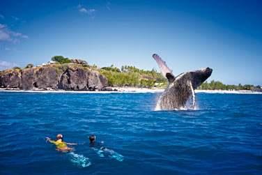 Optez pour une sortie plongée avec palmes, masque et tuba à la rencontre des baleines !