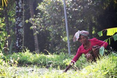 Au coeur des rizières, venez découvrir le Blue Karma Ubud...