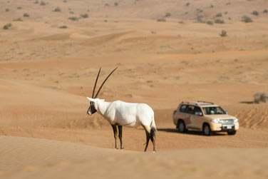 Profitez de votre séjour au coeur du désert pour découvrir les merveilles du désert...