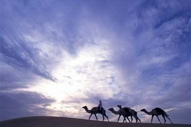 Randonnée à dos de chameau...