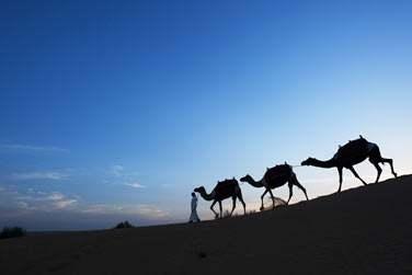 Accompagné d'un guide, optez pour une balade à dos de chameau au moment du lever du soleil. Un superbe spectacle !