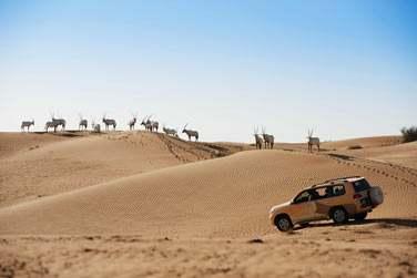 L'hôtel organise des randonnées en 4x4... Vous aurez sans doute l'occasion d'apercevoir des oryx