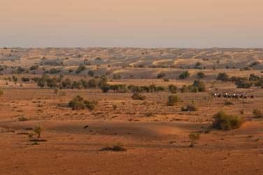 L'hôtel organise des randonnées à cheval dans l'immensité du désert