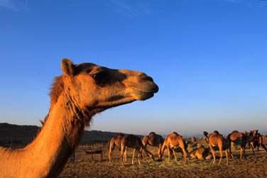 Après votre escapade dans les montagnes, route vers le grand désert d'Oman...