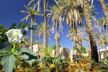 Le massif du Hajjar abrite des petits villages tradtionnels enfouis dans une végétation luxuriante