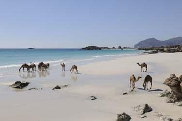 Après un circuit riche en découvertes dans le nord, direction le sud d'Oman et la région de Salalah !