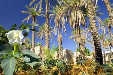 Le massif du Hajjar abrite des petits villages traditionnels enfouis dans une végétation luxuriante