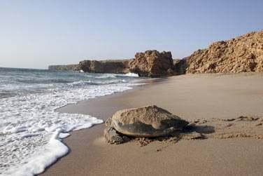 La plage de Ras Al Jinz