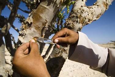 Pays de l'encens... Découvrez la magnifique région du Dhofar