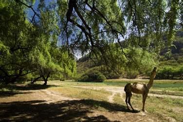 Vous découvrirez des paysages très différents du nord d'Oman