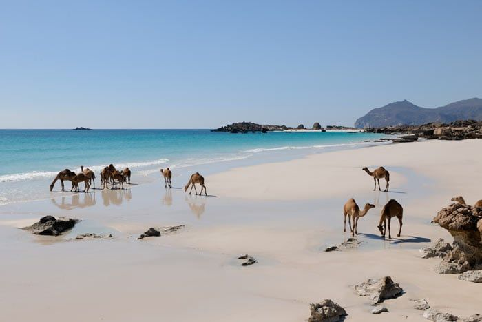 Combiné Oman du Nord au Sud