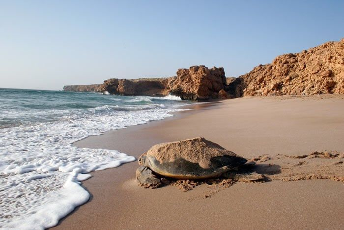 Carapace Lodge, Ras al-Jinz Scientific & Visitors Centre, Oman