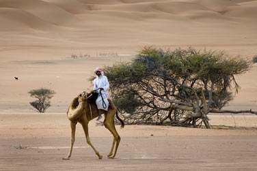 Desert Night Camp propose des safaris à dos de dromadaire à travers les dunes