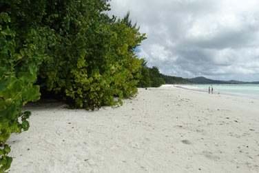 Une longue plage de sable blanc bordée de végétation tropicale