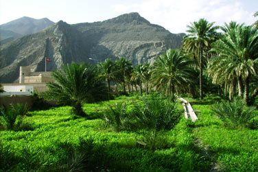 Birkat Al Mouz, l'un des villages en ruine les plus connus du sultanat d'Oman