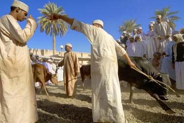 Si vous êtes à Nizwa, ne manquez pas le marché aux bestiaux ! Un moment authentique très animé
