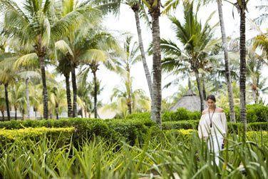 Le jardin tropical, calme et reposant ...
