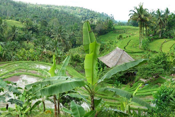 Hôtel Bali Eco Stay, Indonésie