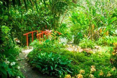 alliée à une végétation tropicale