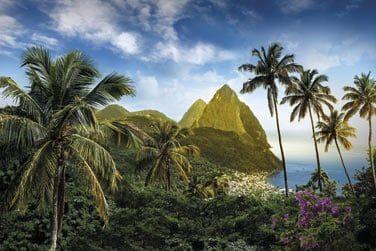 Un véritable condensé exotique... qui sent bon les Caraïbes !