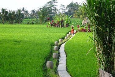 Promenez-vous au coeur des rizières...