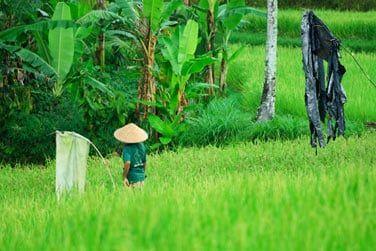 Admirez ce paysages de rizières qui vous entoure