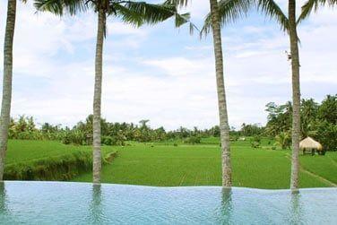 Depuis la piscine, profitez de la vue sur les magnifiques rizières d'Ubud