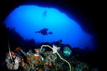 Les fonds marins sont d'une richesse incroyable !