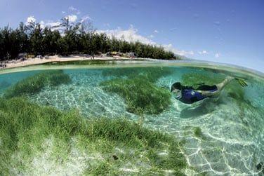 Une petite baignade dans l'océan indien ?