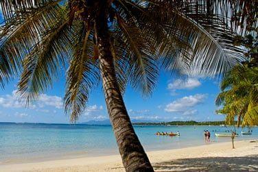 Cocotiers, sable blond et eau turquoise