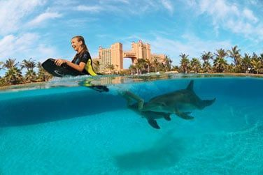 Lieu unique pour entrer en contact avec les dauphins