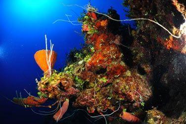 Explorez les superbes jardins de corail
