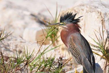 L'île est peuplée d'une multitude d'oiseaux
